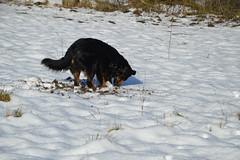 DSC_0755 (monteiro.mariah) Tags: cachorro cavar