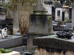 Cats (3) on Tombstones in Cimetière de Montmartre (carolemason) Tags: cats paris tombstones cimetièredemontmartre
