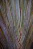 LEMUR-PARK-8 (RAFFI YOUREDJIAN PHOTOGRAPHY) Tags: park city travel trees plants baby white cute green animal fauna canon river jumping sweet turtle wildlife bricks mother adorable adventure explore lemur 5d lemurs bushes madagascar 70200 antananarivo mkiii