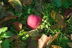 W sadzie (Hejma (+/- 4500 faves and 1,4 milion views)) Tags: red green apple nature leaves yellow daylight poland polska natura zielony wiato jabko czerwony ty licie