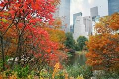 When October Goes (floralgal) Tags: nyc newyorkcity centralpark manhattan highrisebuildings colorfultrees autumnincentralpark autumninnewyorkcity