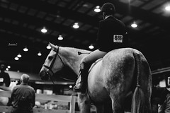 (suzcphotography) Tags: horse cute monochrome animal canon 50mm virginia lexington riding pony finals jumper hunter equestrian equine t3i suzcphotography swvhja