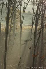 Rayos de luz (Javibeje) Tags: luz landscape luces nikon paisaje bosque invierno tamron javier frio navarra bejarano nafarroa astitz nikonista d7200