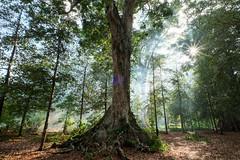 The grove. Pulau Banda Besar (Laura Jacobsen) Tags: indonesia banda maluku nutmeg tropicalparadise kenari islandparadise offthebeatentrack bandaislands bandabesar kenarinut