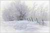 Foggy winter scene (ingridvg) Tags: winter snow fence trees drift fog icefog snowdrift sturgeoncounty alberta prairies cold white