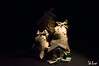 Composizione natalizia (f.cevrero) Tags: noel christmas composition natale tree feltro home marchè mercatino natalizio nikon d3200 light darkness oscurità luce lampada portrait subjet subject soggetto