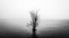 The lonely tree - Garda lake, Italy - Fine art photography (Giuseppe Milo (www.pixael.com)) Tags: natural calm peaceful nature water italy italia lake trees plant contrast mysterious monochrome photography sky horizontal geotagged white photo tranquil prints landscape european garda black outdoor landscapes sirmione coast rocks vacation outside tree photograph fineart beautiful travel symmetrical canvas print blackandwhite fog europe wallart bw onsale