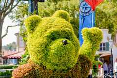 Pooh (disneylori) Tags: pooh winniethepooh topiary flowerandgardenfestival unitedkingdom worldshowcase epcot waltdisneyworld disneyworld wdw disney