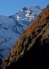 Contrasti (ez.81) Tags: neve autunno ghiacciaio alberi versante della montagna alpi