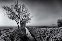 Foggy morning on the Fens (David Feuerhelm) Tags: nikkor monochrome bw fens fenland lincolnshire wideangle infrared silverefex serene fog nikon d90 ir water drain sky