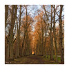 In the woods (baladeson) Tags: trees arbres parc versailles light forêt forest formatcarré square france yvelines