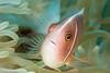APL_161224_0393_Bunaken (alanpl) Tags: bunaken indonesia northsulawesi tasikria uw xmas16