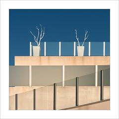 Vegetació / Vegetation (ximo rosell) Tags: ximorosell cullera composició color cuadrado nikon d750 detall terrat terraza squares
