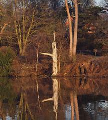 2016_12_0544 (petermit2) Tags: clumberpark clumber sherwoodforest sherwood nottinghamshire nationaltrust nt fisherman fishing