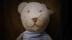 smiling teddy (*Nils aus Kiel*) Tags: teddy animal smiling toy eyes lonely bokeh nose closeup spielzeug kid lost balticsea beach