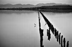 silent perspective (s@brina) Tags: perspective view peace silence nature monochrome blackandwhite