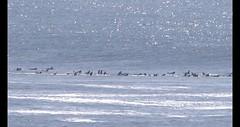 Mavericks, big waves surfing, tube riding (rocksandstones) Tags: mavericks bigwavessurfing tuberiding