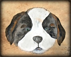 Please Willy (patrick.verstappen) Tags: saintbernard dog pet animal painting art watercolor texture textured twitter willy photo picassa pinterest pat ipernity ipiccy image yahoo gingelom google flickr facebook d7100 sigma winter fabriano paper belgium nikon
