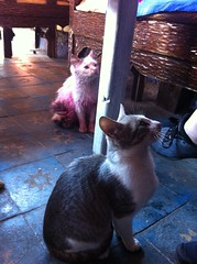 The pink cat sat in a bag of paint pigment (AJoStone) Tags: morocco chefchaouen cats blue pink