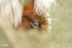 The Horse's Eye (Renate van den Boom) Tags: 03maart 2017 europa gelderland highkey jaar maand nederland paard renatevandenboom stijltechniek veluwezoom zoogdieren
