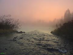 Into the mist. (Yolanta Z) Tags: stagathe