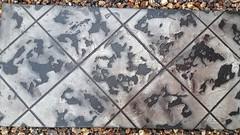 Tuscan Slate Diagonal Tile - Brown & Black (Decorative Concrete Kingdom) Tags: training concrete board overlay class epoxy sample resurfacing decorativeconcrete concretestaining