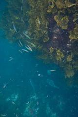 20150705-DSC_0674.jpg (d3_plus) Tags: sea sky fish beach japan scenery underwater diving snorkeling  shizuoka    apnea izu j4  waterproofcase    skindiving minamiizu       nikon1 hirizo  1030mm  nakagi 1  nikon1j4 1nikkorvr1030mmf3556pdzoom beachhirizo misakafishingport  1030mmpd nikonwpn3 wpn3