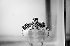 Hello. . .is it me you're looking for? (Cielo0o) Tags: red bw pets animal animals canon aquarium turtle planet slider 5d aquatic eared