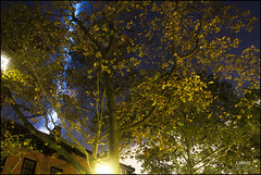 That's Me in the Corner (Linus Gelber) Tags: nyc autumn trees newyork art leaves brooklyn lights memorial worldtradecenter 911 brooklynheights neighborhood installation twintowers wtc sept11 tribute september11 beams tributeinlight september11th aitkenplace sidneyplace tributeinlight2015