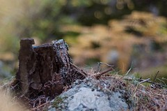 Mordida (ELTROTAMO) Tags: naturaleza verde hoja hojas nikon natural paisaje amarillo bosque otoño tala tronco fondo roto mordida fondodeescritorio piedra raiz airelibre raices granito d90 otoñal tocon podrido nikond90 hojacaduca circolos