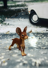 Тойчик для БЖД )) (by Hand Dreams) Tags: dog felting tiny toyterrier