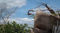 Bioparc (Joaqun Galindo MIlin) Tags: africa park parque espaa naturaleza nature valencia animals spain vegetation animales biodiversity vegetacin savanna biopark biodiversidad savana comunidadvalenciana bioparc sbanaafricana joaqungalindomilin