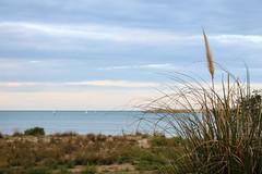 Lungofiume di Pescara (NekoNome87) Tags: blue sky sand october mare pescara arenaria ammophila lungofiume