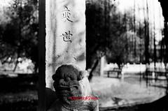 stone lion ( SUNRISE@DAWN photography) Tags: blackandwhite film monochrome streetphotography vintagecamera filmcamera filmphotography vintagelens ilfordpan400 canoneos1000 135film analoguephotography pentaxsmctakumar1450