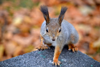 I want to know where is my nuts? (the whole story in photos in the first comment!)