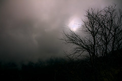 Tenebra (bormanus_sv) Tags: sky black tree cielo nebbia albero nero thickfog tenebre oscurit