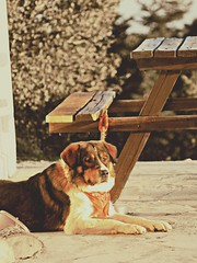 Sunbathing in winter (philos from Athens) Tags: sunset dog sun mountain december greece parnitha flabouri picmonkey