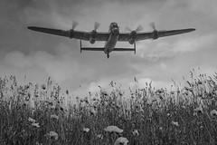 POP0006 (Smart Aviation Art) Tags: poppy poppies poppyfield poppyfields lancaster vulcan avro spitfire hurricane aircraft military bbmf