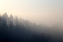 Foggy Landscape (bcmng) Tags: foggylandscape fog landscape sunset nebel landschaft nebellandschaft winterlandscape winterlandschaft winter 2016 frankdinger photography bühl achern lauf neusatz burgneuwindeck sonnenuntergang tree caspardavidfriedrich gradient