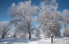 Fresh Snow and Clear Sky (maytag97) Tags: winter idaho maytag97 rural hoar frost cold fresh fence road tree branch quiet serene clean nikon d750