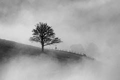 Misty tree (Craig Hannah) Tags: tree oak dovestones dovestonesreservoir chewvalley greenfield saddleworth pennine peakdistrictnationalpark countryside bw lone mist fog weather westriding yorkshire oldham greatermanchester england uk craighannah 2017 january