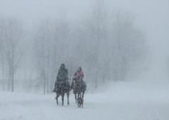Par un beau dimanche   IMG_0428 (syllyn01) Tags: cheval chevaux horse chien dog hiver winter québec canada neige snow blanc white paysageduquébec sentier route calme road way peaceful cavalier horseman horsewoman tempêtedeneige blizzard snowstorm
