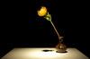 Happy New Year (catherineduan) Tags: chrysanthemum flower taiwan taipei blossom flowers blackbackground plant decoration yellow dahlia shiyangculturerestaurant shiyang 食养山房 新北市 teahouse
