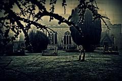 Walking the grounds (Steve.T.) Tags: churchyard graveyard standrewshatfieldpeverel standrewschurch cemetery essex nikon d7200 sigma18200 church spooky eerie foggy fog grave headstone