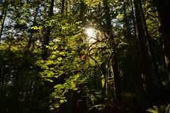 (Ian Threlkeld) Tags: d7000 nikon nikonphotography mynikonlife britishcolumbia beautifulbc mapleridge goldenearsprovincialpark parks nature naturephotography forests trees landscapes canadian irt bc pnw westcoast summer provincialparks supernaturalbc explore explorebc explorecanada