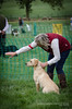 The Big Gun Dog Weekend at Court Farm, Betley, Cheshire. (Digidiverdave) Tags: cheshire davidhenshaw nikon5300 canine dog event gundog henshawphotographycom labrador workingdog betley england unitedkingdom