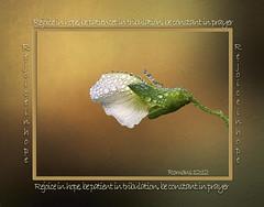 Rejoice in Hope! (kweaver2) Tags: kathyweaver kdxweaver hope patience prayer rejoice botanical flower blossom pea plant scripture bible romans