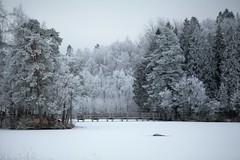 Frosty landscape (Annaadolfsson) Tags: snow landscape white winter tree bridge ice lake sweden canon