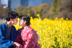 Happy kimono couple kissing in rape musters field (Apricot Cafe) Tags: img15985 20s asia asianethnicity canonef85mmf18usm japan japaneseethnicity kimono koreanethnicity multiethnicity tokyo beautiful charming cheerful communication couple enjoying fieldmustard friendly horizontal international kissing men outdoors sitting togetherness traditionalcloth twopeople waistup walking women youngadult chūōku tōkyōto jp