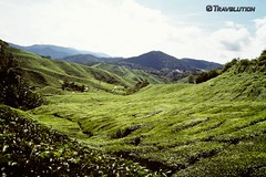 Tea Plantation, Cameron Highlands (Travolution360) Tags: malaysia tea plantation cameron highlands nature hillstation walking hiking